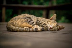 Bild von einer schöafenden Katze