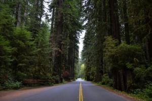 Straße in einem Wald